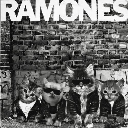 Recrean las portadas más famosas de ROCK y METAL con GATITOS (Fotos)